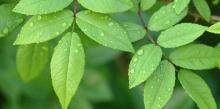 little-green-leaves-1200x600