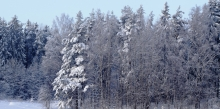 winter-forest-scene-1200x600