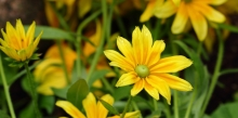 yellow-flower-with-some-water-drops-1200x600